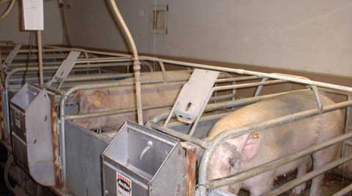 Farrowing barn